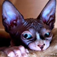 Фотография профиля Геры Геры ВКонтакте