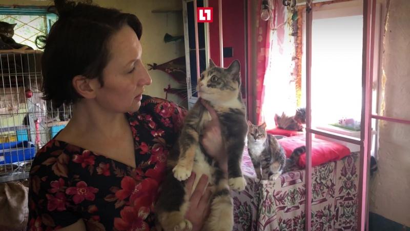 Продала квартиру и купила дом для кошек