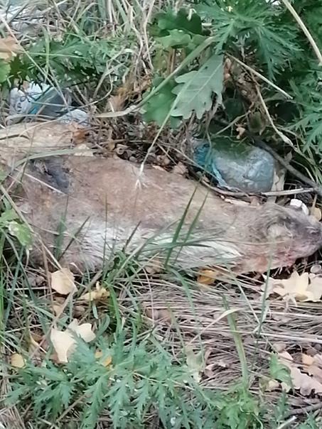 Останки забитых животных неизвестные сваливают в л...