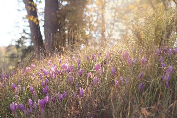 Среди увядшей травы и желтых опавших листьев зацве...