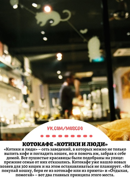 ТОП-8 антикафе с животными в Москве: пить кофе, гладить к...