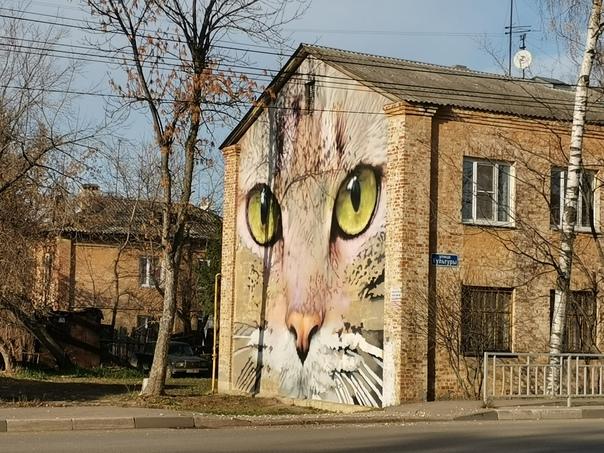 Шедевр готов 🐱 Хищный взгляд с торца дома на улице...