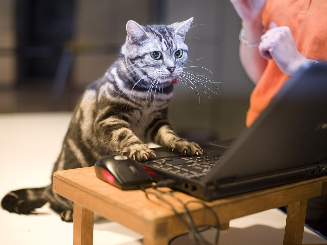"""Администратор """"Без кота и жизнь не та"""""""