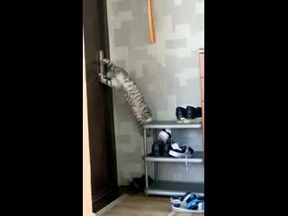 Неудачный побег