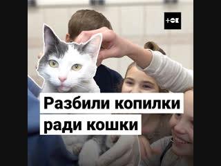 Школьники собрали деньги на операцию кошке, которую сбила машина