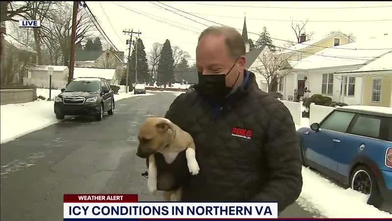 Репортёр не закончил репортаж из-за пёсика