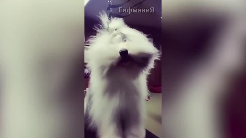 Красотка ГифманиЯ Смешные видео