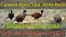 Как поймать фазана на рыболовную сеть 🐦 Поймал сразу ДВА 🐓 Ловушка порадовала 👍💪