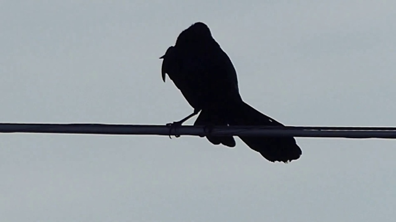 Bird on a Wire two