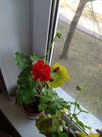 Вера Кашина