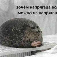 Илья Козин