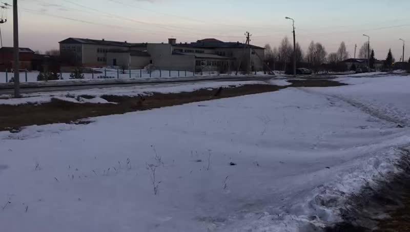 Собаки напали на ребенка (п.Западный, г.Алапаевск)