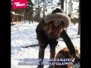 Маша Ивакова едет на собачьей упряжке