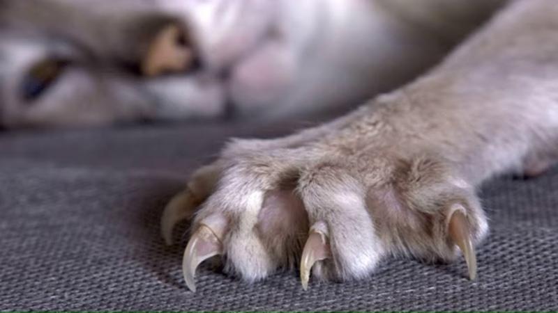 Как отучить кошку драть обои кошки могут драть обои потому что