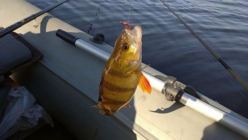 Озеро Чудское Ловим плотву Сезон жидкой воды открыт Рыбалка с физруком
