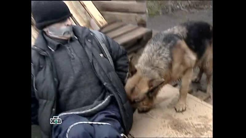 Возвращение Мухтара 2 2009 5 сезон 93 серия