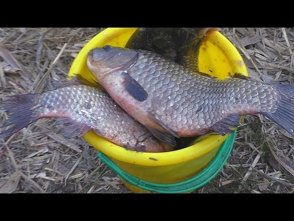 Рыбалка Сигнализатор поклевки крупные караси на снасть макушатник My fishing