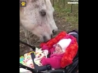 Любовь к лошадкам с самого детства