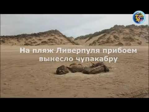На пляж Ливерпуля прибоем вынесло чупакабру